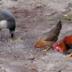 Bird feed time